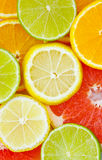 mieszająca cytrus owoc Zdjęcie Stock