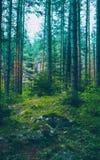 Mieszana Greenwood lasowa fotografia przedstawia ciemnej mglistej wiecznozielonej szpilki zdjęcia stock