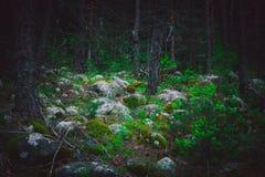 Mieszana Greenwood lasowa fotografia przedstawia ciemnej mglistej wiecznozielonej szpilki zdjęcie royalty free