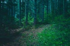 Mieszana Greenwood lasowa fotografia przedstawia ciemnej mglistej wiecznozielonej szpilki zdjęcia royalty free