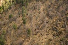 Mieszana lasowa wiosna w górach Tło Obrazy Royalty Free