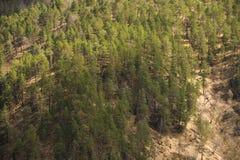 Mieszana lasowa wiosna w górach Tło Zdjęcia Royalty Free