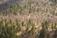 Mieszana lasowa wiosna w górach Tło Zdjęcie Stock