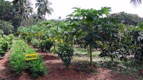 Mieszana owocowa plantacja Fotografia Royalty Free