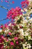 mieszane kwiaty obraz stock