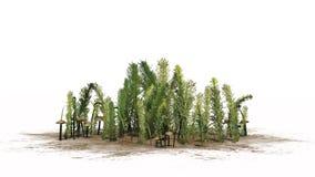 Mieszane zielenie różne zielone rośliny i brudno- pieczarki - obrazy royalty free