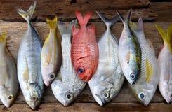 Mieszanek kolorowe świeże ryba zdjęcie stock