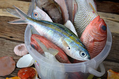Mieszanek kolorowe świeże ryba fotografia stock