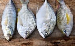 Mieszanek kolorowe świeże ryba zdjęcie royalty free