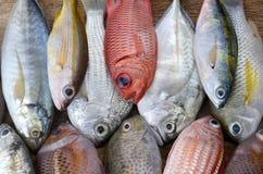 Mieszanek kolorowe świeże ryba obrazy royalty free