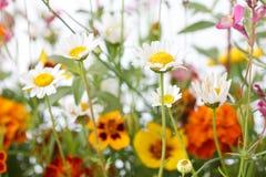 Mieszani dzicy pole kwiaty Zdjęcie Stock