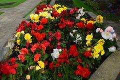 Mieszani kolorów kwiaty obrazy royalty free