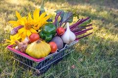 Mieszani organicznie warzywa kalafior, brokuły, czosnek, zielone cebule, pomidory i zieleni grochy na zielonej świeżej trawie w w Obraz Royalty Free