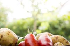 Mieszani organicznie warzywa w pucharze Zdjęcia Royalty Free