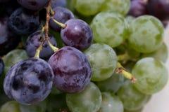 Mieszani winogrona Zdjęcia Royalty Free