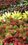 mieszanina owoców Zdjęcia Stock