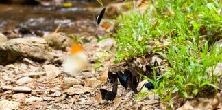 Mieszanka motyl zdjęcie stock