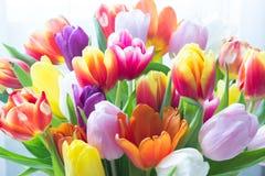 Mieszanka tulipanów kwiaty Fotografia Royalty Free