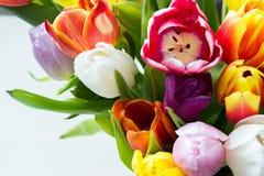 Mieszanka tulipanów kwiaty Zdjęcia Royalty Free