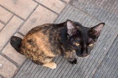 Mieszany koloru kota obsiadanie na ziemi, fotografia od odgórnego widoku Zdjęcie Stock