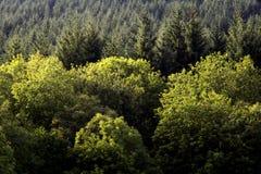 Mieszany las w Szkockich średniogórzach Fotografia Stock
