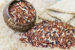 Mieszany Rice Zdjęcie Royalty Free