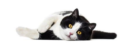 Mieszany trakenu kota lying on the beach na stronie przeciw białemu tłu zdjęcie stock