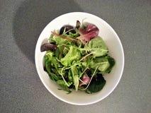 Mieszanych warzyw zieleni wodna sałatka, czysty jedzenie, diety jedzenie, Zdrowy jedzenie Fotografia Stock