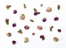Mieszkania nieatutowy kwiatów, róż tło/ zdjęcia royalty free