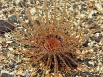mieszkanie anemonowa tubka obrazy stock
