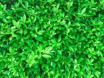 Mieszkanie nieatutowy, Kreatywnie tropikalna zieleń opuszcza deseniowego układ, natura Obraz Stock