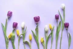 Mieszkanie nieatutowy od wiosna tulipanów zdjęcia royalty free