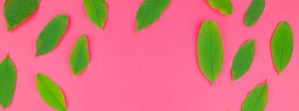 Mieszkanie nieatutowy wzór z świeżymi zielonymi liśćmi fotografia stock