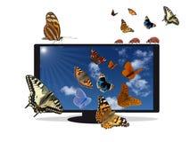 Mieszkanie TV z niebieskim niebem i insektami Zdjęcie Royalty Free