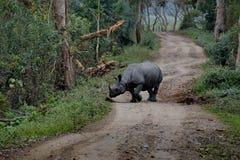 Mieszkanowie Kaziranga park narodowy Biała nosorożec zdjęcia stock