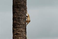 Śmieszna wiewiórka w drzewie fotografia royalty free