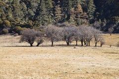 śmieszni drzewa Obraz Royalty Free