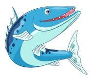 Śmieszny barracuda Zdjęcia Royalty Free