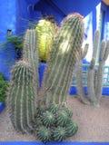 Śmieszny kaktus zdjęcia royalty free