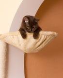 śmieszny koszykowy kot Zdjęcia Royalty Free