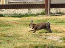 Śmieszny królik Fotografia Stock