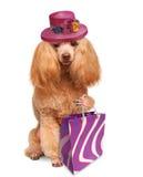 Śmieszny pies z torba na zakupy Obrazy Royalty Free