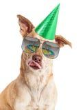 Śmieszny Psi Urodzinowego torta odbicie Zdjęcie Royalty Free