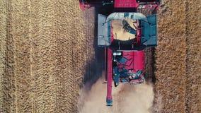 Mietitrebbiatrice che lavora al grande giacimento di grano nella campagna, vista aerea del fuco video d archivio