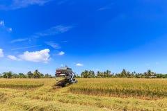 Mietitrebbiatrice nel giacimento del riso Fotografia Stock