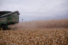 Mietitrebbiatrice polverosa sul raccolto asciutto e raccolto del grano Immagine Stock