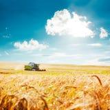 Mietitrebbiatrice su un giacimento di grano agricoltura Immagini Stock
