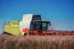 Mietitrebbiatrice su un giacimento di grano agricoltura Fotografie Stock Libere da Diritti