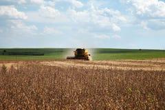 Mietitrice che fa raccolta del giacimento della soia - Mato Grosso State - Immagine Stock