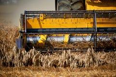 Mietitrice che lavora al giacimento di grano Fotografie Stock Libere da Diritti
